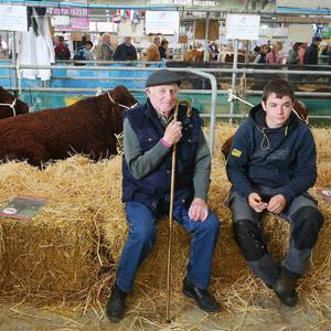 Press Eye - Belfast - Northern Ireland - 16th May 2019 Day two of the Balmoral Show in partnership with Ulster Bank at Balmoral Park outside Lisburn. Resting in the cattle shed. Picture by Jonathan Porter/PressEye