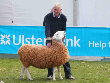 Balmoral Show: Mark quids in after returned ram takes Texel