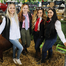 Naomi Alexander, Hannah Alexander, Zara Gabbey and Lucy Gabbey with Dexter cattle, Ballyboley Dexters from Greyabbey