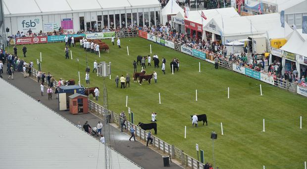 The opening day of the Balmoral Show on Wednesday.