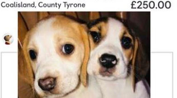Police have issued a warning about buying puppies online. Credit: PSNI