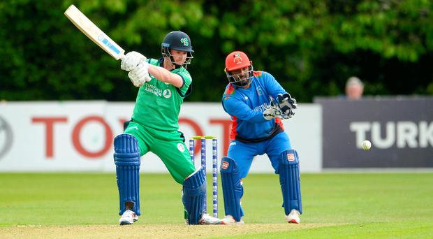 In the swing: William Porterfield goes on the attack against Afghanistan at Stormont yesterday