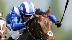 High hopes: Mustashry is aiming for Royal Ascot success