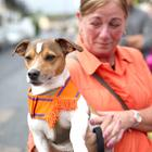 12/07/19 McAuley Multimedia AHOGHILL.. Dodger the dog enjoys the Twelfth celebrations in Ahoghill. Pic Steven McAuley/McAuley Multimedia