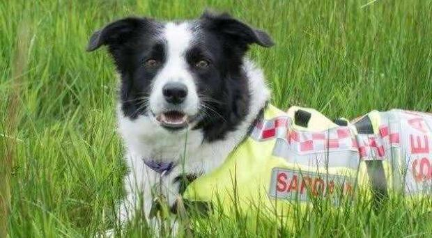 Floss the search dog located Carol Gray who had been missing for four days.