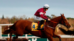 Sam performer: Samcro, pictured with Jack Kennedy on board, is today's star attraction at Down Royal