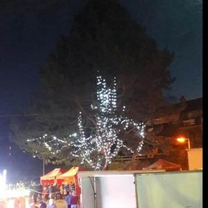 The tree brought disappointment to Kilkeel.