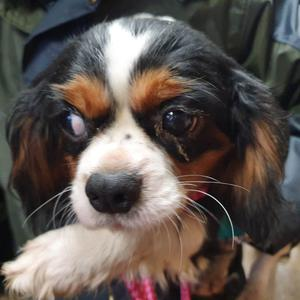 One of the dogs seized by the PSNI
