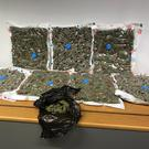 The cannabis seized by police in Belfast