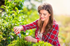 Fresh air: pruning in the garden