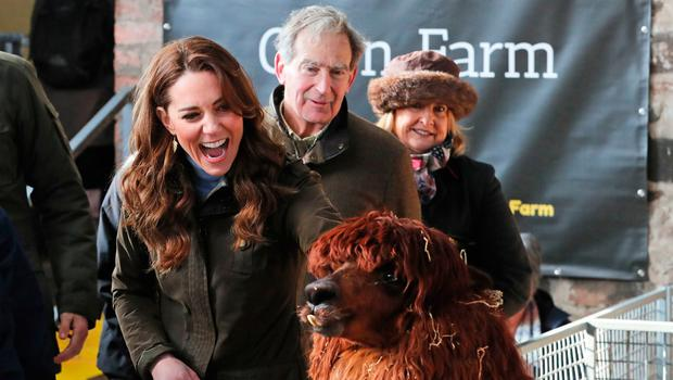The Duchess of Cambridge strokes an alpaca during a visit to The Ark Open Farm, at Newtownards, near Belfast. February 12, 2020