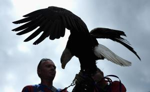 LONDON, ENGLAND - AUGUST 18:  A bald eagle, symbol of Crystal Palace is seen ahead of the Barclays Premier League match between Crystal Palace and Tottenham Hotspur at Selhurst Park on Augsut 18, 2013 in London, England.  (Photo by Jamie McDonald/Getty Images)