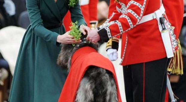 The Duchess presenting shamrock to the Irish Guards' during last year's St Patrick's Day parade at the Mons Barracks in Aldershot