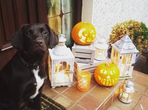 Sadie O'Connell from Maghera embracing the Halloween spirit 2015. Pic: Clodagh O'Connell
