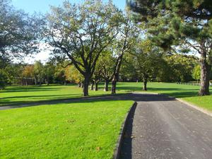 This is a picture taken by myself on 20/10/16 of the trees in Alexandra Park, Belfast - Gerard McCartan