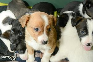 Abandoned puppies that were taken to Assisi Animal Sanctuary