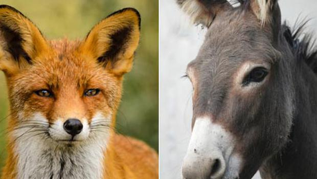Chinese donkey meat recalled at Wal-Mart after found to contain fox