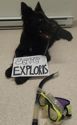 """Save Exploris campaigners: """"Yes, this is dog"""". Jetta, Vancouver Island, Canada Image source: Twitter"""