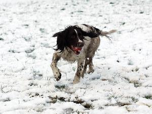 Picture by Freddie Parkinson/Press Eye © In Wallace Park, Lisburn Ralph enjoys looking for his ball.