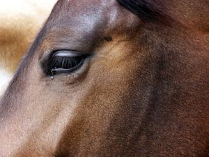 A man has been charged after allegedly carrying out sex attacks against a horse.