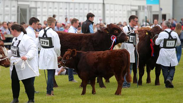 Press Eye - Belfast - Northern Ireland - 18th May 2018  Third day of the 2018 Balmoral Show, in partnership with Ulster Bank, at Balmoral Park. Cattle judging at the show.   Picture by Jonathan Porter/PressEye