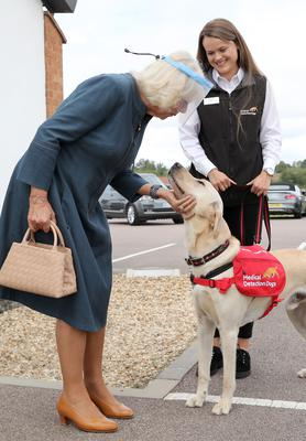 Camilla meets Storm, a Labrador Golden Retriever cross (Chris Jackson/PA)