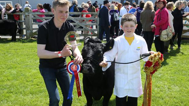 PressEye-Northern Ireland- 16th May 2018-Picture by Brian Little/ PressEye  Riverside Special School pupils  Stephen Millar and Matthew Bloomer Dexter project during the  First day of the 2018 Balmoral Show, in partnership with Ulster Bank, at Balmoral Park  Picture by Brian Little/PressEye