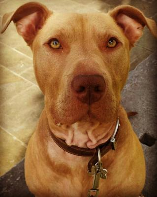 A campaign has been launched to save Hank the dog