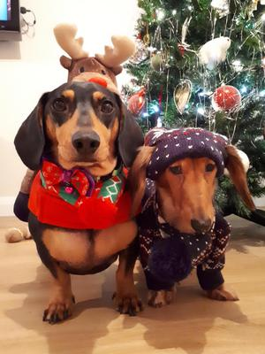 Dexter & Poppy Davis with their Christmas outfits.