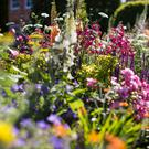 Varieties of flowers on display at 'The Harrods British Eccentrics Garden' at the Chelsea Flower Show on May 23, 2016 in London, England. (Photo by Jack Taylor/Getty Images)