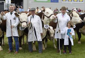 15/5/19: Cattle judging at the Balmoral Show. Picture: Michael Cooper