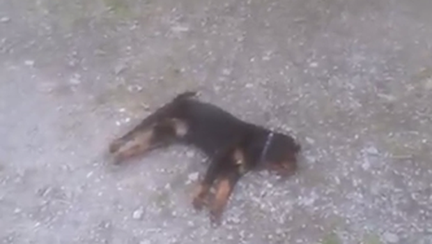 Two dogs collapsed after breathing in slurry fumes on Northern Ireland farm.
