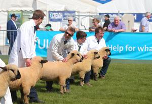 Press Eye - Belfast - Northern Ireland - 15th May 2019  First day of the Balmoral Show, in partnership with Ulster Bank: Sheep showing during the show at Balmoral Park outside Lisburn.   Picture by Jonathan Porter/PressEye