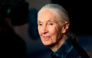 Dr. Jane Goodall attending the EE British Academy Film Awards held at the Royal Albert Hall, Kensington Gore, Kensington, London. PRESS ASSOCIATION Photo. Picture date: Sunday February 18, 2018. See PA Story SHOWBIZ Bafta. Photo credit should read: Yui Mok/PA Wire.