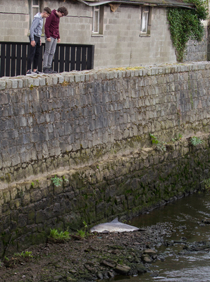 Two boys look at the dead porpoise on the banks of the Clanyre River