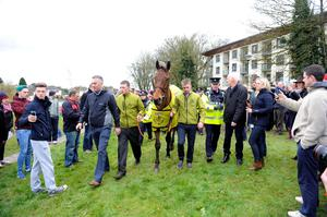 Crabbie's Grand National winner Rule The World during a homecoming event in Mullingar, County Westmeath, Ireland. PRESS ASSOCIATION Photo. PA Wire