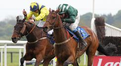 In the hunt: Salsify (right) will be ridden by Banbridge-based Stephen Clements in the Foxhunters at the Cheltenham Festival today