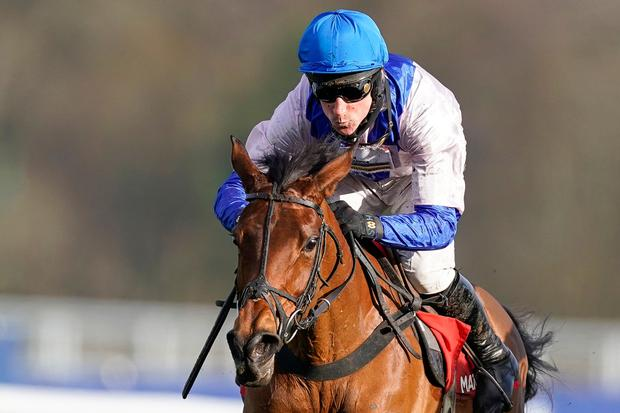 No change: Roksana will feature in the Close Brothers Mares' Hurdle