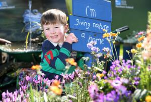 5 May 2017 - Picture by Darren Kidd / Press Eye.    The glorious May weather continues today (Fri 5th May) as the gates open to Northern IrelandÕs premier gardening event - Allianz Garden Show Ireland at Antrim Castle Gardens.  Promising a fabulous Festival of Flowers, Food and Fun, the three day Show is set to welcome a bumper crowd to the stunning Antrim setting over the weekend. Enjoying the sunshine is Finlay Smyth from Ballymena.   The Allianz Garden Show Ireland will run from 5th - 7th May at Antrim Castle Gardens and is open daily from 10am-6pm with parking in town centre car parks and at The Junction with a shuttle bus running. Adults tickets cost £10 (concession £8), the event is FREE for children under 16 and there is a reduced rate for online booking. For more information visit www.gardenshowireland.com.