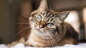 Pet lover: a cat soon becomes an integral part of your life