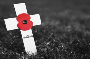 Strong symbol: but many people in Ireland still choose not to wear a poppy for Remembrance Sunday
