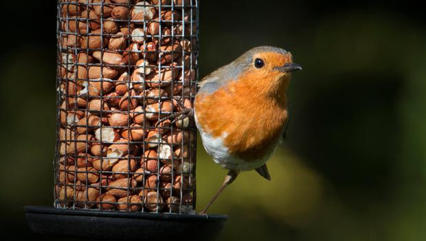 A firm favourite in the nation's back gardens, there's no reason a bird feeder shouldn't be just as pleasant round the front