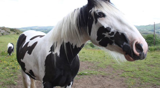 Horsing around: Jack looks fine after his ordeal with the naked rider