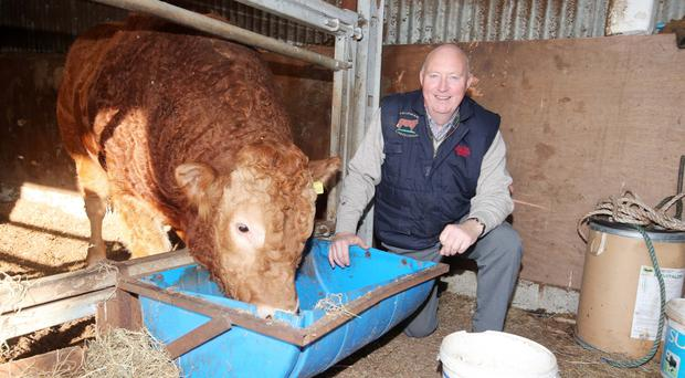 Meat market: Henry Savage on his farm outside Cullyhanna