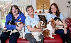 Helping hands: Catherine (right) with Olive Hughes (left) and Barbara Hilditch (centre) and some of the puppies they care for