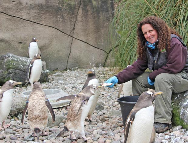 Animal magic: Carolyn Hope loves her job as a keeper at Belfast Zoo