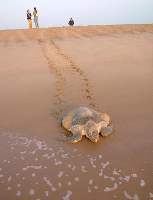 Far and away: Save turtles in Costa Rica