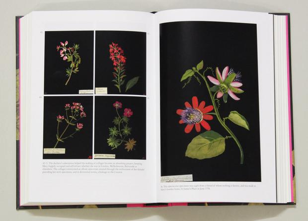 Fine art: A selection of Mary Delany's paintings and illustrations as they appear in the new book by Clarissa Campbell Orr. The images are copyright of the trustees of the British Museum