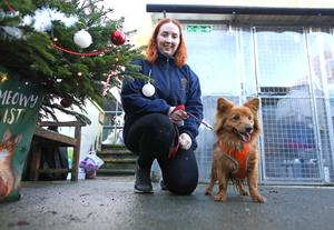 Joy Hughes at Assisi sanctuary in Newtownards with Barnie