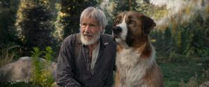 Epic tale: Harrison Ford as John Thornton with Buck in classic adventure The Call of the Wild